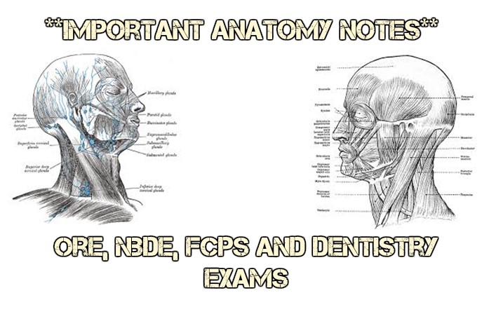 Important Anatomy Notes for ORE, NBDE, FCPS and Dentistry Exams ...
