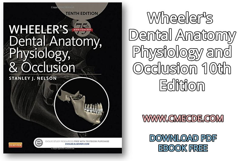 Download Wheelers Dental Anatomy Physiology And Occlusion 10th Edition PDF Free